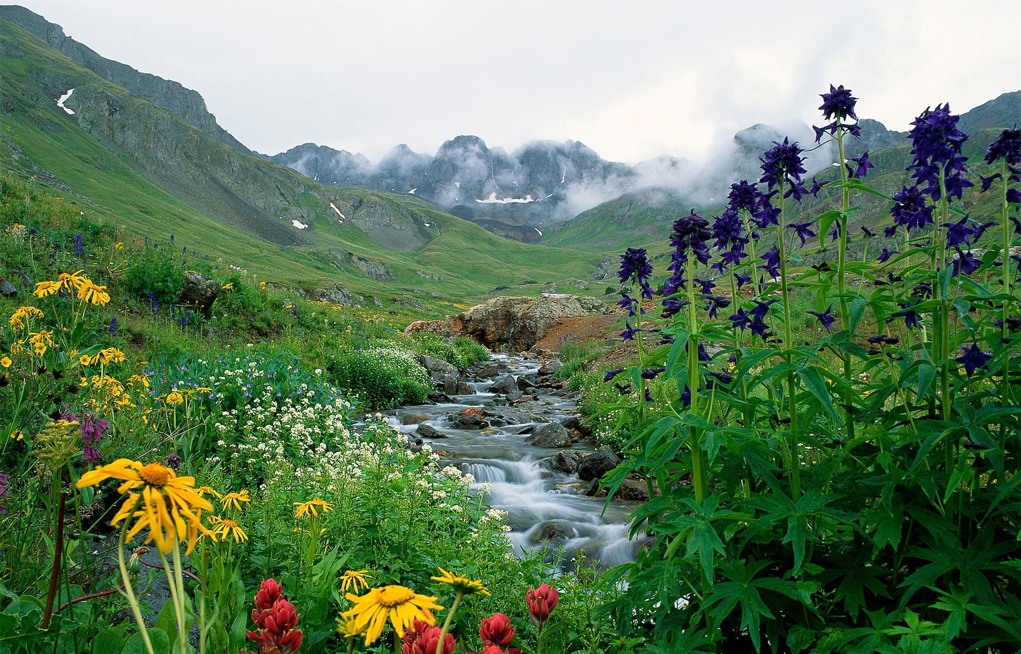 MISTY-BASIN-telluride-wildflowers-creek